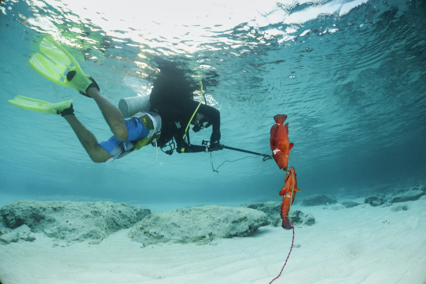 , Spearfishing for Beginners – The Complete Guide, Anglers Hookup