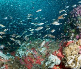 NOAA Office of National Marine Sanctuaries