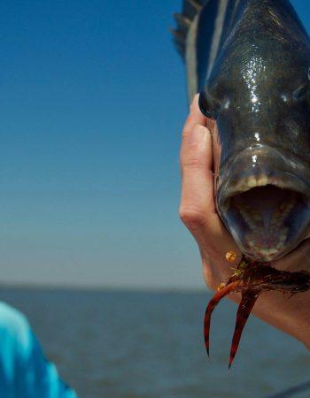 FishAngler, LLC