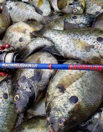 Jenko Fishing
