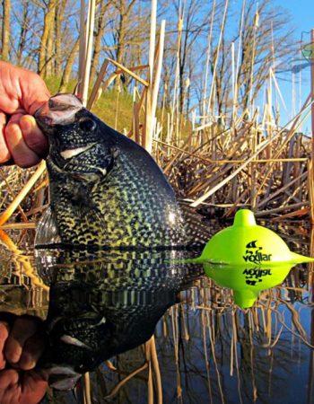 Fishing Tackle Retailer