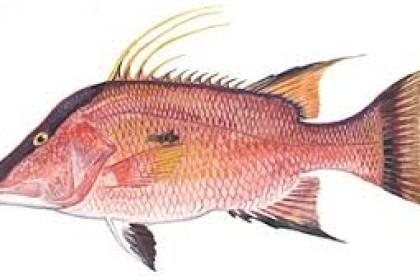Popular Sport Fish List in the Florida Keys